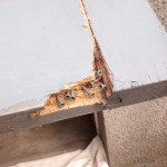 Rotten section with screws to bond repair